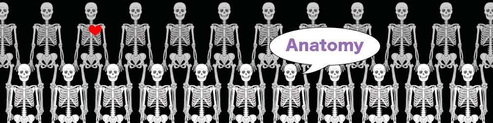 anatomybanner